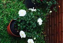 Vida Verde!!!! / Plantas