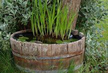 Mini Bassin et Plantes d'eau