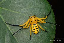 Entomology / Entomology