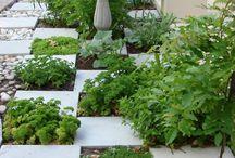 Garden / Herb garden