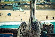 Animals-MY WORK / Tierfotografie, Tiere hautnah, Animals,