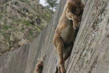 Climbing - lezenie