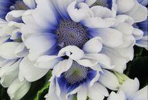 Naturaleza, flores y mas