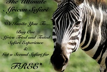 Safari Specials / Contact us for the latest specials! http://africatriedandtested.com/about-us/contact-africa-travel-company/