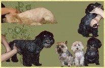 Úprava psů