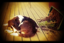 { A Dogs Life }