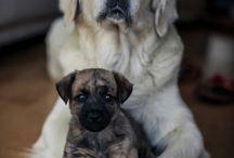 dog&puppies