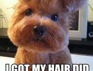 Bahahahahaha!!!! / by Donna Adkins