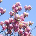 Kwiaty do ogrodu / Najpiękniejsze kwiaty pasujące do każdego ogrodu