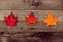 Breathtaking Fall Images / Fall Images That Will Inspire You