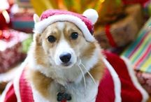 Santa Paws! / by PawBag