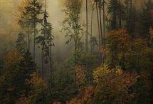 Stromy