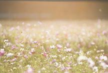 Public Domain Flowers pictures