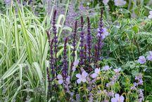 garden plant combinations