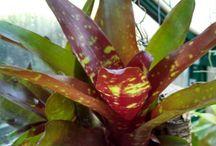 bromeliads. my favourite plant.
