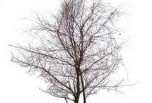 drzewatekstury