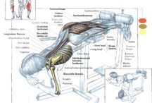 exercises draw
