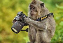 Foto makina ve çekim ayarları