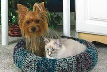 Dog & Cat Beds