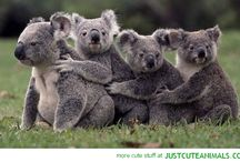 Koala & Panda <3
