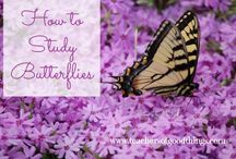MFW- Unit 21 Butterfly / My Fathers World Homeschool - Kindergarten