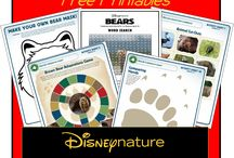 Bears- stories and activities