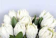 Proteas & Leucospermum