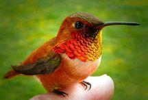 Hummingbirdies :)