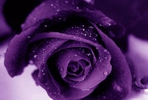 For The Love Of Purple / These pins are not exclusively mine, so feel free to pin as many as you want without fear of being blocked!   Dark purple....my very favorite color!