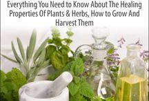 herb teachings