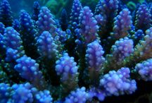 SCUBA Diving / Adventures in the Coral Sea Whilst SCUBA Diving