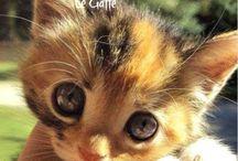 Cute-Dear sirs my angle  p.s I love you     キュート