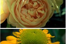 Flower Colours Palette / Colour ideas for the garden flower combination. Have you already tried them?