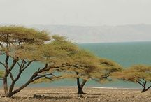 Lake Turkana / Lake Turkana, formerly Lake Rudolf, lies in the Rift Valley of East Africa. It is about 250 km long and 15–30 km wide, with an average depth of about 30 m. Lake Turkana is one of the largest desert lakes in the world, and it lies in a closed basin in northwestern Kenya and southwestern Ethiopia. Turkana has one of the longest living histories on earth, and recent fossil evidence unearthed at Koobi Fora has led to the Lake being referred to as 'The Cradle of Mankind.