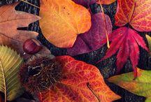 autumn (: