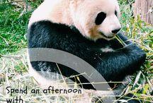 wildlife spotting & conservation / Travel wild