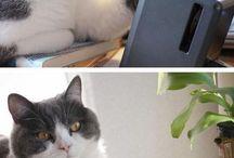 Cats Memes