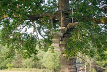 trädplattform