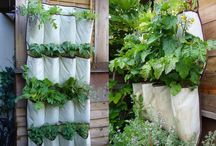 Gardening & Outdoor Decor / by Meghan Peters