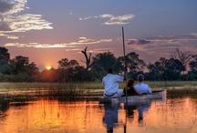 African Plains / by Everett Faulkner