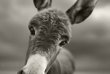 animals I love / by Jennifer Roan