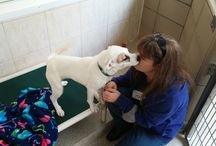 Shelter medicine / Pins of great content on animal shelter medicine and management