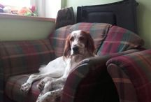 Destiny Diva Aretegerd / Můj pes/ my dog