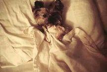 Dog/puppy's