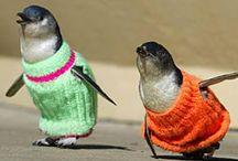 Knitting 4 Pets