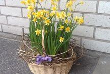 Easter / Easter decorations, food, celebrations