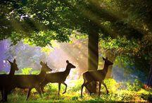 Travel & Natural Photography