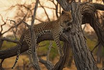 Botswana 2013 / by jimfrost.pictures