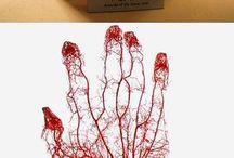 анатома