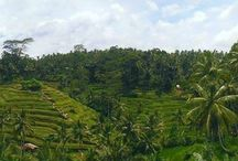 Discovering Bali, Indonesia